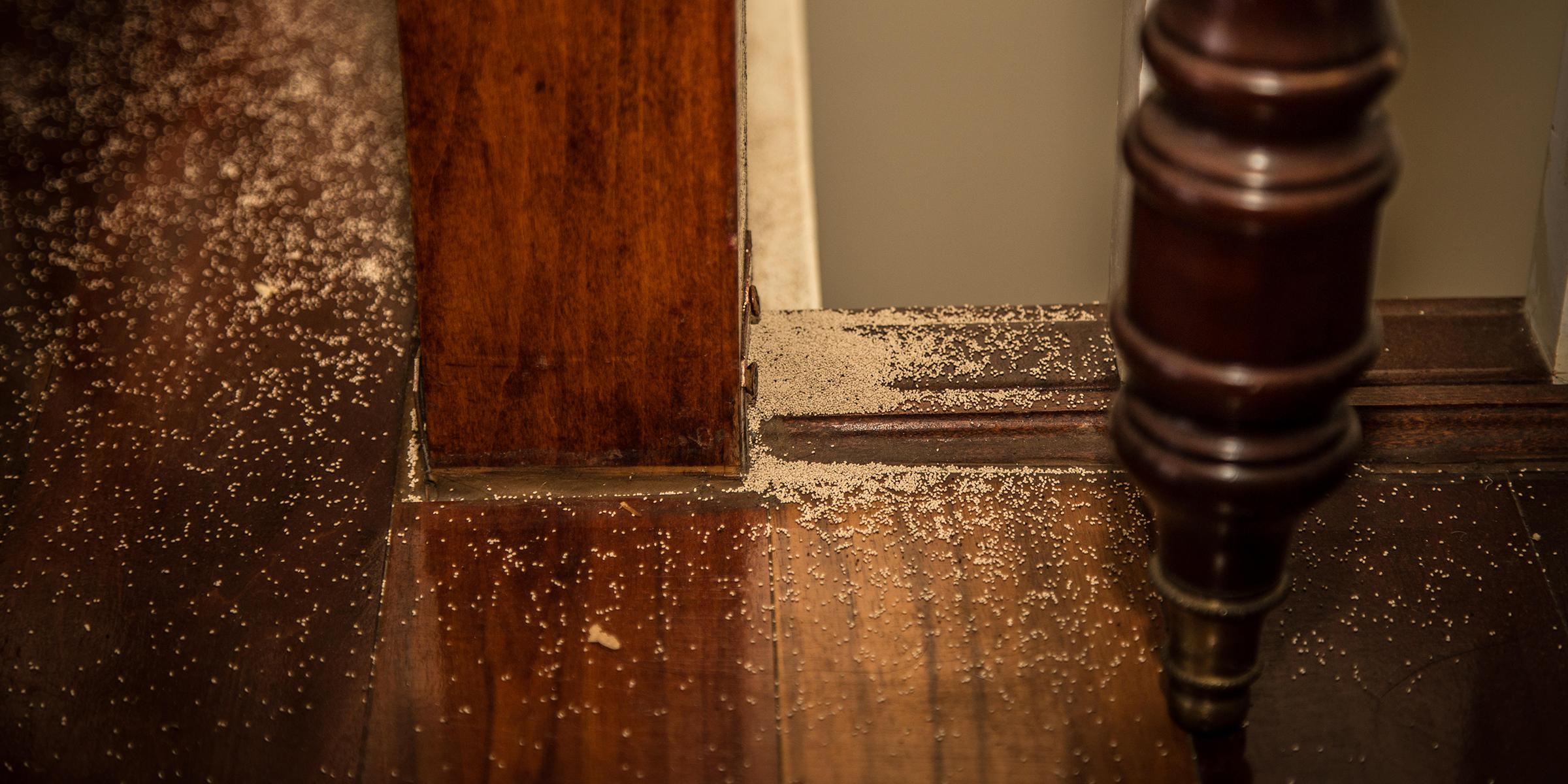 termite prevention gold coast
