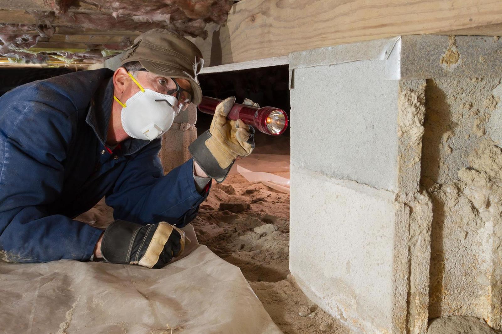 termite treatment prevention removal gold coast brisbane